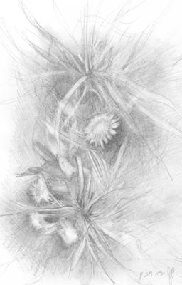 Dandelionscrop