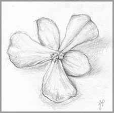 Flower2-